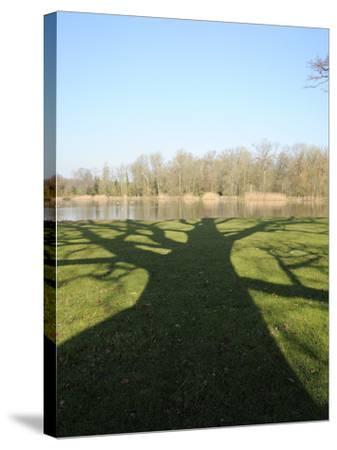 Shadow Cast by Large English Oak Tree (Quercus Robur) on Ornamental Lake, Corsham, England-Nick Upton-Stretched Canvas Print