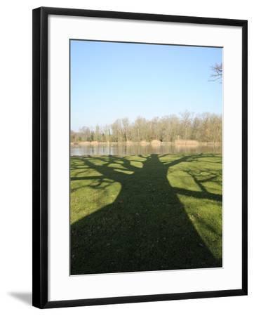 Shadow Cast by Large English Oak Tree (Quercus Robur) on Ornamental Lake, Corsham, England-Nick Upton-Framed Photographic Print