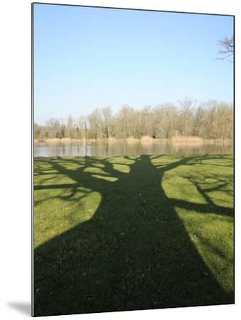 Shadow Cast by Large English Oak Tree (Quercus Robur) on Ornamental Lake, Corsham, England-Nick Upton-Mounted Photographic Print
