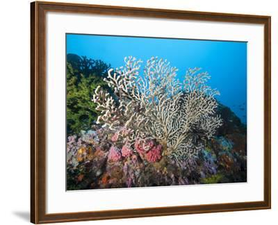 Reef Scene, Sulawesi, Indonesia, Southeast Asia, Asia-Lisa Collins-Framed Photographic Print