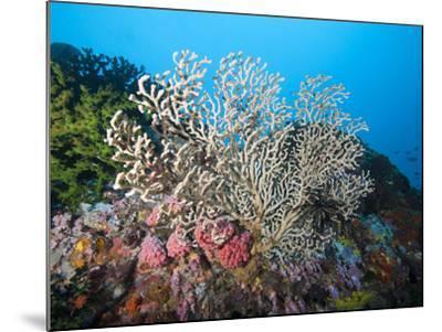 Reef Scene, Sulawesi, Indonesia, Southeast Asia, Asia-Lisa Collins-Mounted Photographic Print