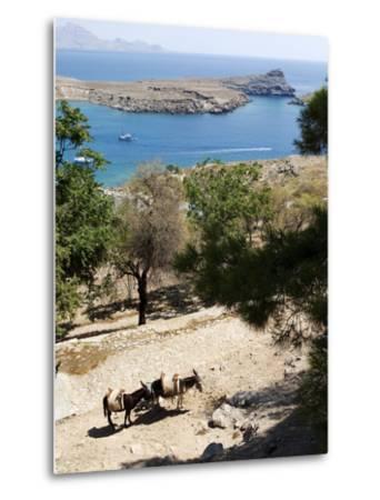 Two Donkeys in the St. Paul Bay, Lindos, Rhodes, Dodecanese, Greek Islands, Greece, Europe-Oliviero Olivieri-Metal Print