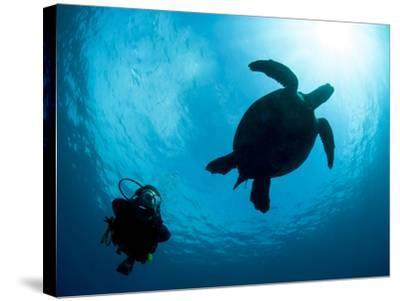 Hawksbill Turtle (Eretmochelys Imbricata) and Diver, Sulawesi, Indonesia, Southeast Asia, Asia-Lisa Collins-Stretched Canvas Print