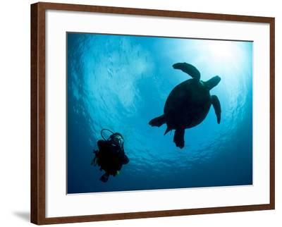 Hawksbill Turtle (Eretmochelys Imbricata) and Diver, Sulawesi, Indonesia, Southeast Asia, Asia-Lisa Collins-Framed Photographic Print