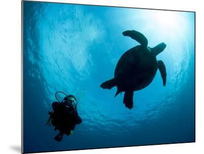 Hawksbill Turtle (Eretmochelys Imbricata) and Diver, Sulawesi, Indonesia, Southeast Asia, Asia-Lisa Collins-Mounted Photographic Print