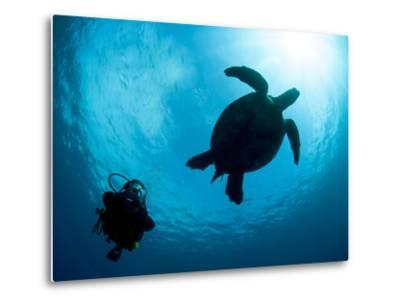 Hawksbill Turtle (Eretmochelys Imbricata) and Diver, Sulawesi, Indonesia, Southeast Asia, Asia-Lisa Collins-Metal Print