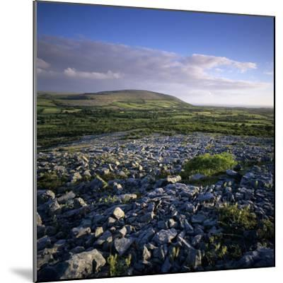 Limestone Pavement, the Burren, County Clare, Munster, Republic of Ireland, Europe-Stuart Black-Mounted Photographic Print