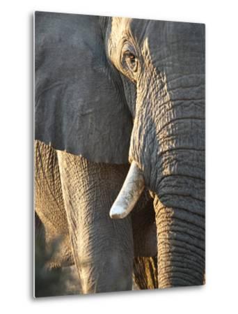 Close Up of Partial Face, African Elephant (Loxodonta Africana), Etosha National Park, Namibia-Kim Walker-Metal Print