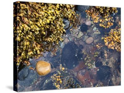 Rock Pool at Catterline, Aberdeenshire, Scotland, United Kingdom, Europe-Mark Sunderland-Stretched Canvas Print