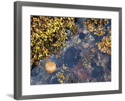 Rock Pool at Catterline, Aberdeenshire, Scotland, United Kingdom, Europe-Mark Sunderland-Framed Photographic Print