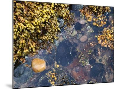 Rock Pool at Catterline, Aberdeenshire, Scotland, United Kingdom, Europe-Mark Sunderland-Mounted Photographic Print