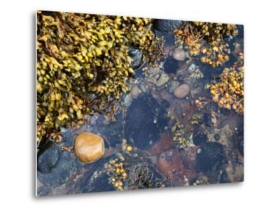 Rock Pool at Catterline, Aberdeenshire, Scotland, United Kingdom, Europe-Mark Sunderland-Metal Print