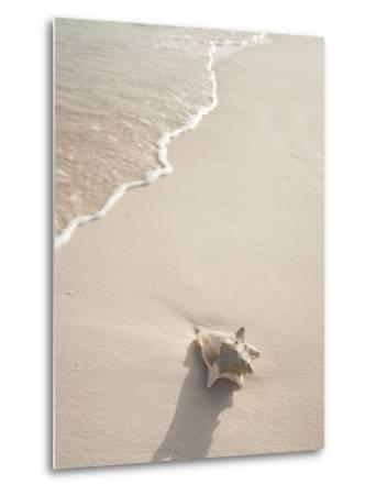 Conch Shell Washed Up on Grace Bay Beach, Providenciales, Turks and Caicos Islands, West Indies-Kim Walker-Metal Print