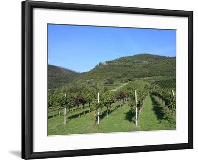 Vineyard, Vincenza, Veneto, Italy, Europe-Vincenzo Lombardo-Framed Photographic Print