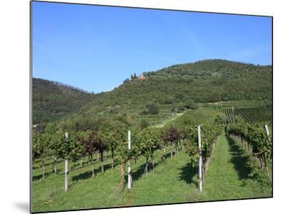 Vineyard, Vincenza, Veneto, Italy, Europe-Vincenzo Lombardo-Mounted Photographic Print