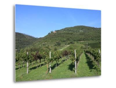 Vineyard, Vincenza, Veneto, Italy, Europe-Vincenzo Lombardo-Metal Print