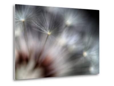Fireworks-Ursula Abresch-Metal Print