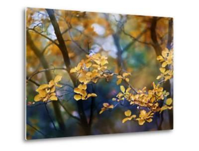 Autumn Leaves-Ursula Abresch-Metal Print