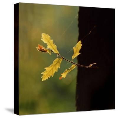 Hope-Magda Indigo-Stretched Canvas Print