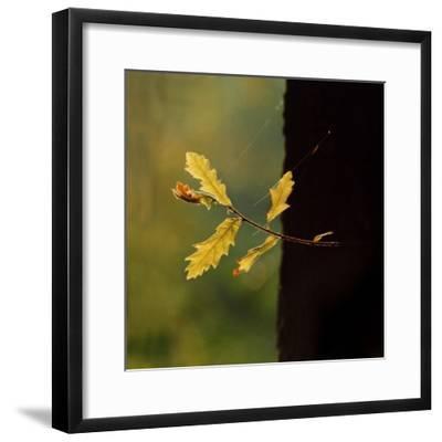Hope-Magda Indigo-Framed Photographic Print