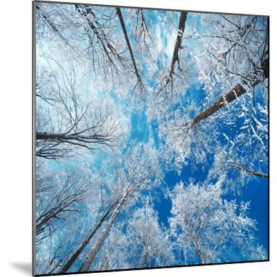 Frozen Sky-Philippe Sainte-Laudy-Mounted Premium Photographic Print