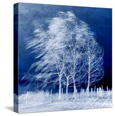 Blue Wind-Philippe Sainte-Laudy-Stretched Canvas Print