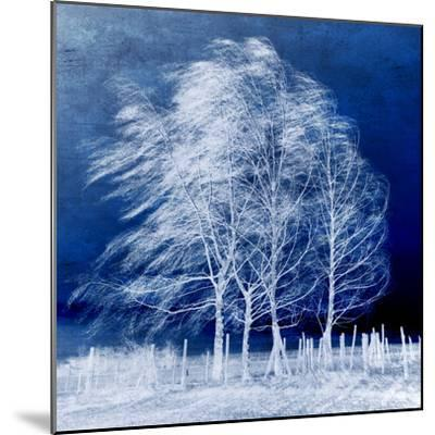 Blue Wind-Philippe Sainte-Laudy-Mounted Photographic Print