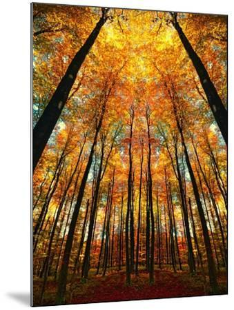 Cathedral Fall-Philippe Sainte-Laudy-Mounted Photographic Print
