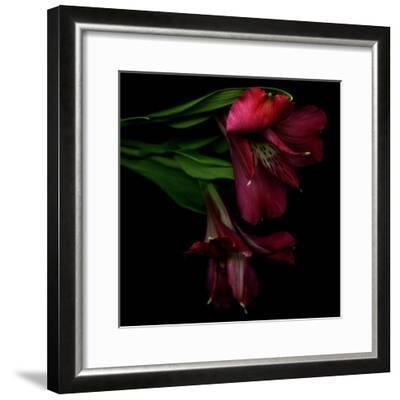 Alstroemeria 4-Magda Indigo-Framed Photographic Print