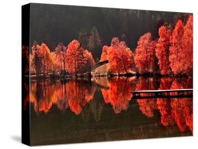 Trees Vs Trees-Philippe Sainte-Laudy-Stretched Canvas Print