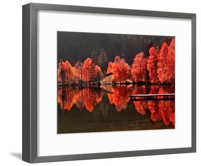 Trees Vs Trees-Philippe Sainte-Laudy-Framed Premium Photographic Print