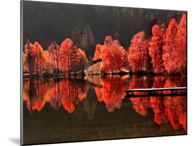 Trees Vs Trees-Philippe Sainte-Laudy-Mounted Premium Photographic Print