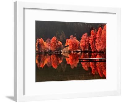 Trees Vs Trees-Philippe Sainte-Laudy-Framed Photographic Print