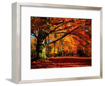 The Tree-Philippe Sainte-Laudy-Framed Premium Photographic Print