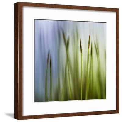 Moss-Ursula Abresch-Framed Photographic Print