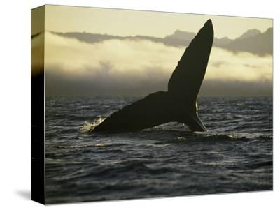 Whales Tale-Art Wolfe-Stretched Canvas Print