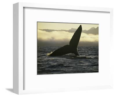 Whales Tale-Art Wolfe-Framed Photographic Print