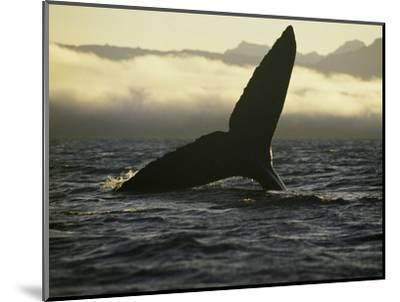 Whales Tale-Art Wolfe-Mounted Photographic Print