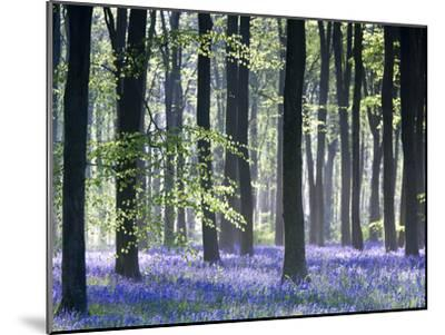 Bluebell Vision-Doug Chinnery-Mounted Premium Photographic Print