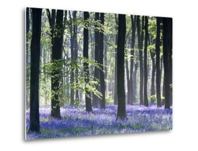 Bluebell Vision-Doug Chinnery-Metal Print