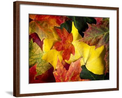 Fallen Glory-Doug Chinnery-Framed Photographic Print