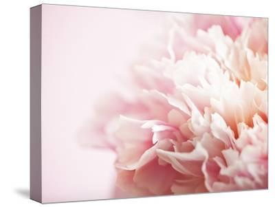 Fade to Pink-Doug Chinnery-Stretched Canvas Print