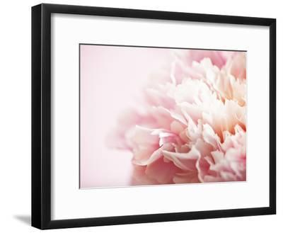 Fade to Pink-Doug Chinnery-Framed Photographic Print