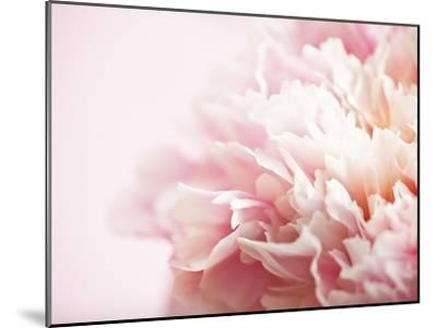 Fade to Pink-Doug Chinnery-Mounted Photographic Print