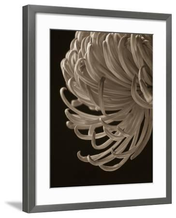 Floral Close-Up 1-Doug Chinnery-Framed Photographic Print