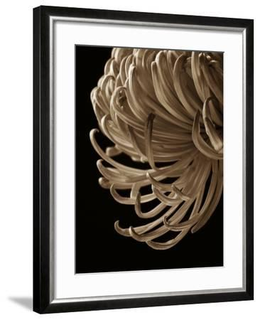 Floral Close Up 2-Doug Chinnery-Framed Photographic Print