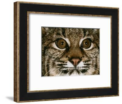 Very Focused-Art Wolfe-Framed Photographic Print