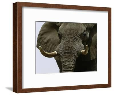 What a Hunk-Art Wolfe-Framed Photographic Print