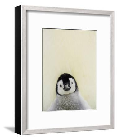 Angel Face-Art Wolfe-Framed Photographic Print