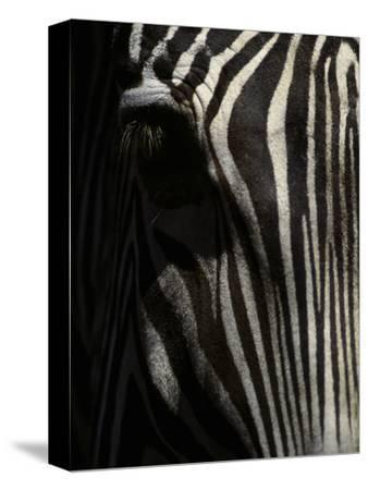Ever Sleek 2-Art Wolfe-Stretched Canvas Print